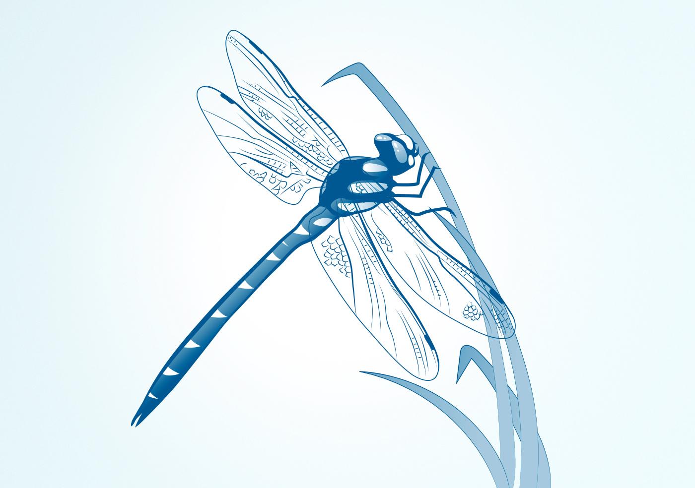 Illustrationen für Gewässerschutz und -Unterhalt