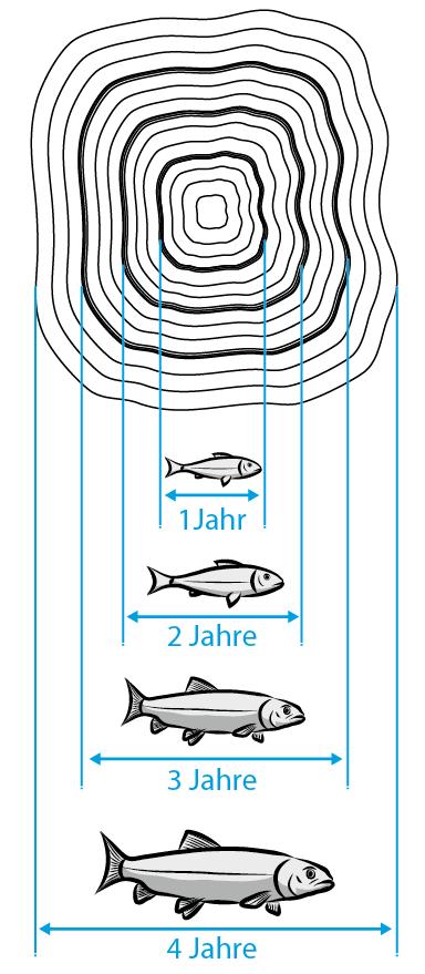 Fischalter