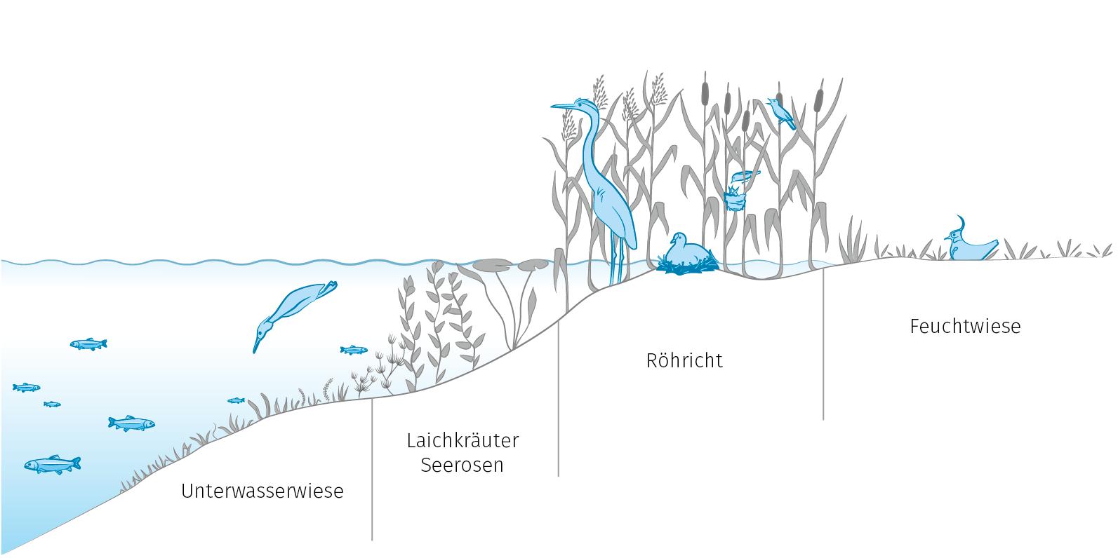 Uferzone2